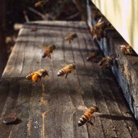 I nostri prodotti: il miele